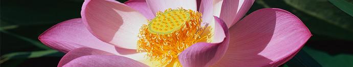 Feng shui in cvetje