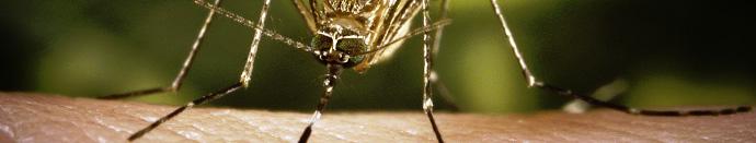 Kako omejiti število komarjev v svojem domu?